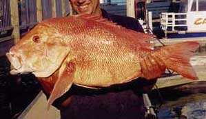 Disability fishing catch red emperor fish